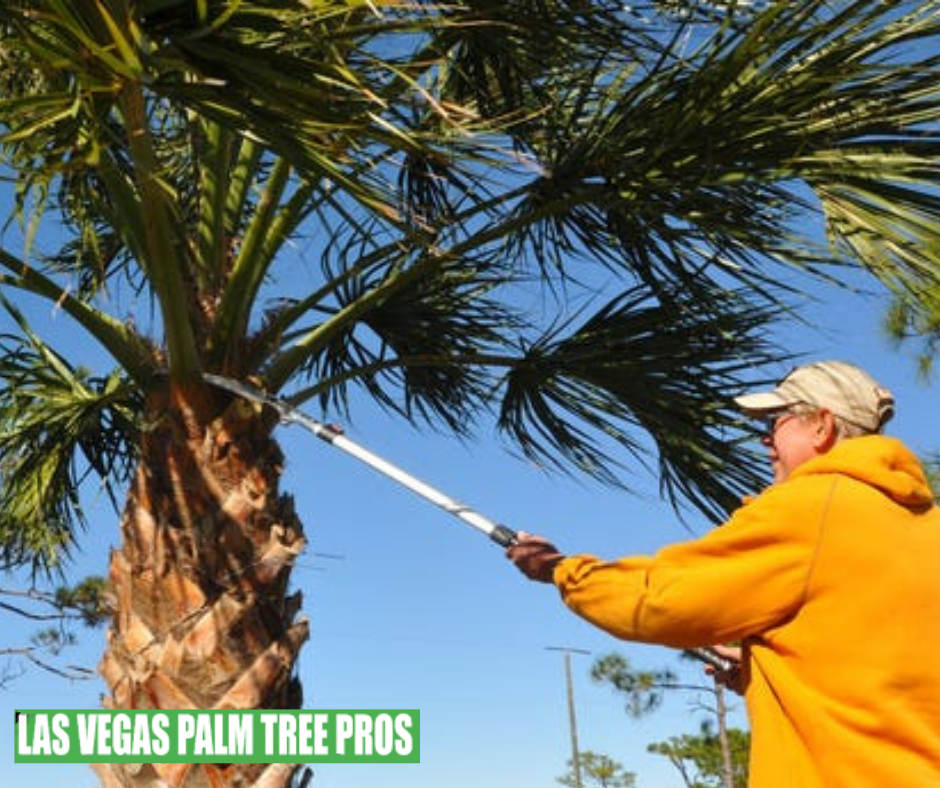 Why Hire A Tree Removal Service?
